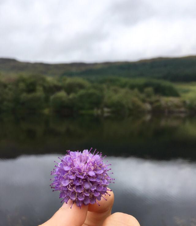 Fotospots in Schottland - Blüte vor einem See